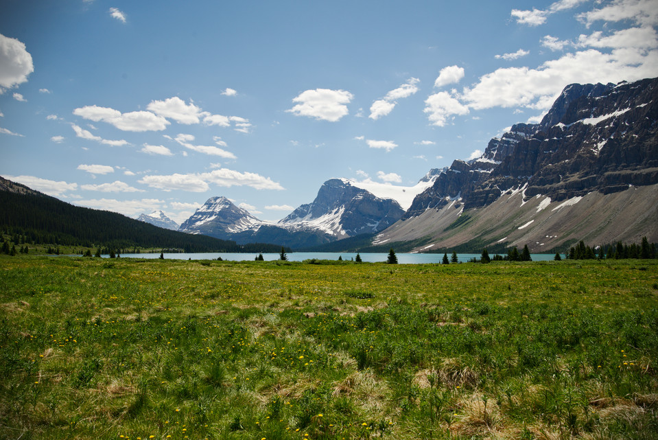 Bow Lake   Fields and Flowers thumb